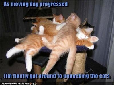 unpack cats